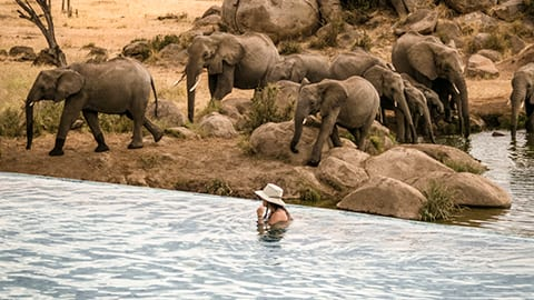 View elephants from the infinity pool