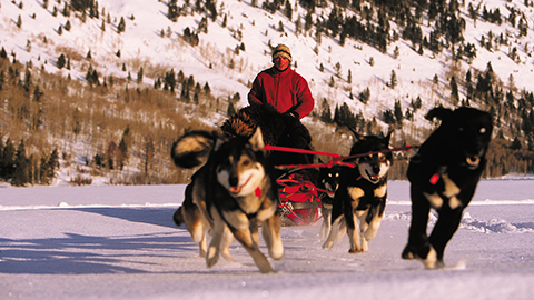 Dogsledding in the Alps
