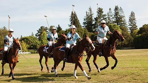 Polo and Asado - Professional Polo Match
