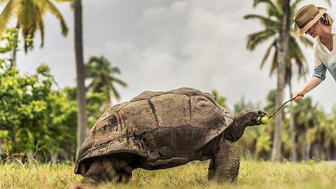 George, a 120-year-old Aldabra giant tortoise