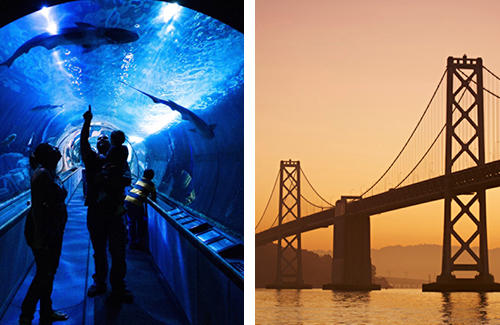 Aquarium / Golden Gate Bridge