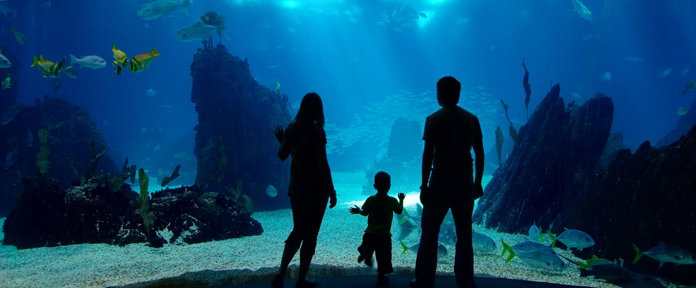 family at the aquarium