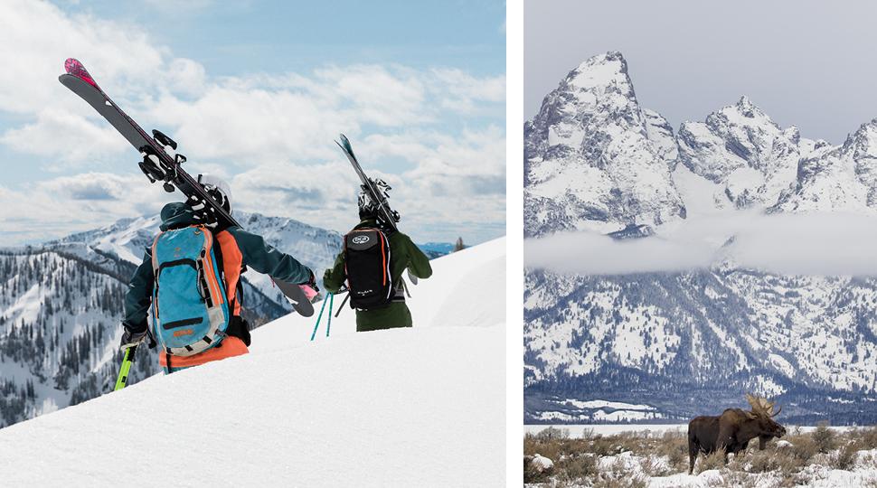 Jackson Hole Skiiers And Moose