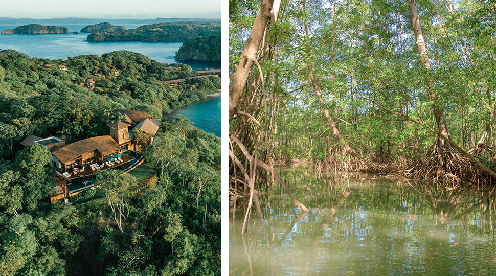 Property Overview And Mangroves