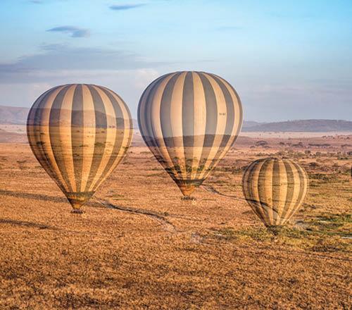 Serengeti 0559 500x440