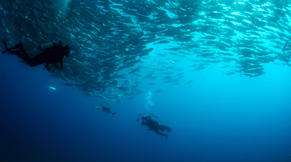Two scuba-divers swim under a school of fish