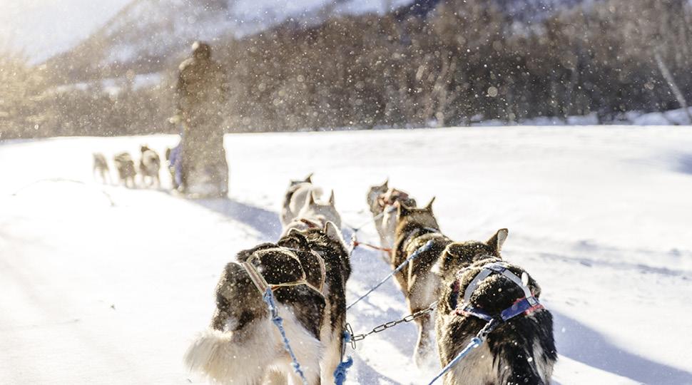 Dog sled mushes through snow